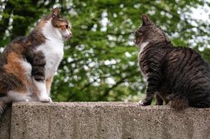 cat-817798_1280
