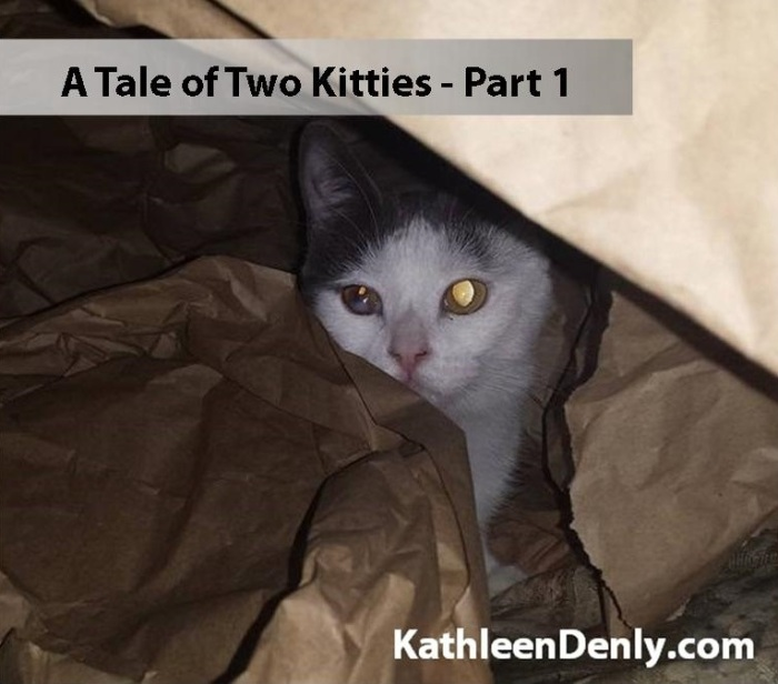 a-tale-of-two-kitties-part-1