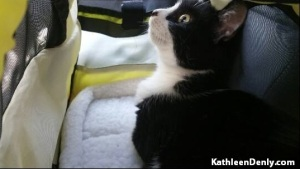 Athena in her carrier on the trip home. Photo belongs to Kathleen Denly
