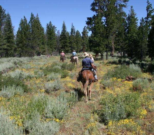 horseback-riding-1393029_1280